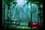 002_Bamboos